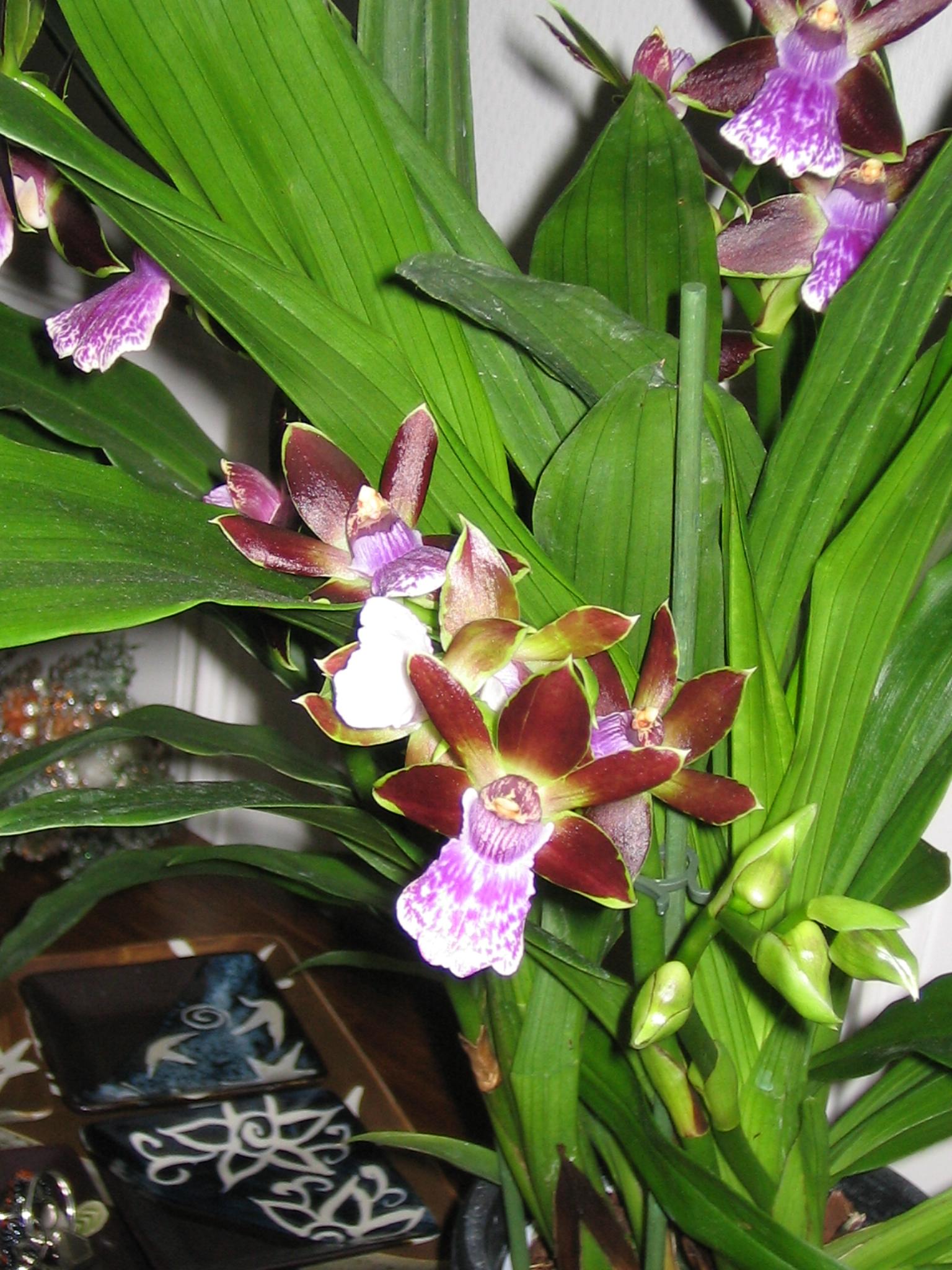 eric et franck orchidee a bruges. Black Bedroom Furniture Sets. Home Design Ideas
